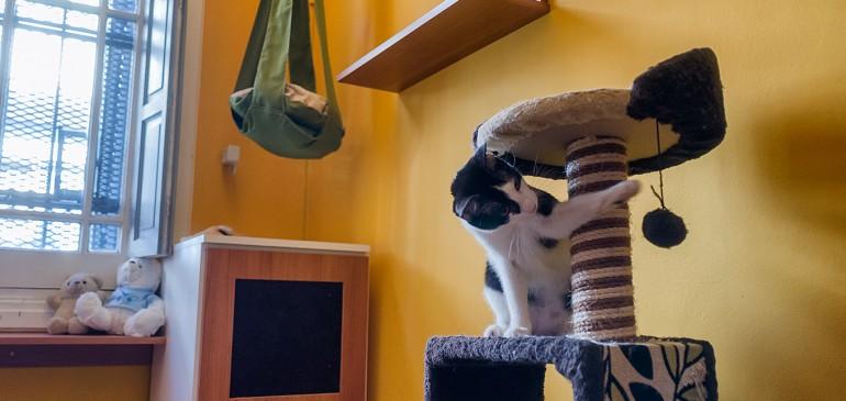 Uruguay: hotel para gatos ofrece amor y confort a sus huéspedes