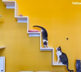 Yellow-foto-interior-5