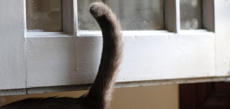 El lenguaje corporal felino: posiciones y movimientos de la cola