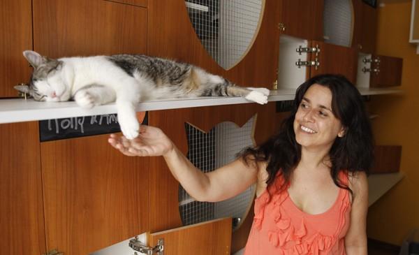 Uruguai tem hotel com tratamentos especiais para gatos